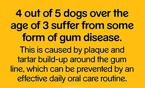 Pedigree DentaStix Hundesnack für große Hunde (25kg+), Zahnpflege-Snack mit Huhn und Rind, 10 Packungen je 7 Stück (10 x 270 g) - 4