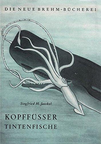 Kopffüßer: Tintenfische