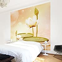 Apalis Vliestapete Blumentapete Seerosen Zauber Fototapete Quadrat | Vlies  Tapete Wandtapete Wandbild Foto 3D Fototapete Für
