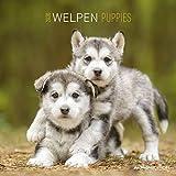 Welpen 2020 - Puppies - Wandkalender - Broschürenkalender (30 x 60 geöffnet) - Tierkalender - Wandplaner