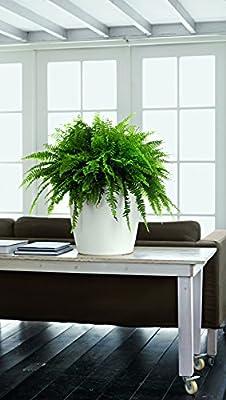 Lechuza Farbe Classico 43cm Glatte weiß Selbstwässernder Traditionell Runder Pflanztopf von Lechuza UK - Du und dein Garten
