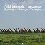 Wild animals Tanzania 2016: Wild animals Tanzania, Serengeti, Ngorongoro, Tarangire, Wilderness (Calvendo Animals)