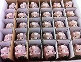 iapyx® 60 Stück Glücksschweinchen Glücksbringer aus Porzellan Glücksklee Glückskäfer Marienkäfer Weihnachtsdeko Christbaumschmuck Silvesterdeko Neujahr Hochzeit Jubiläum Give Away - 3