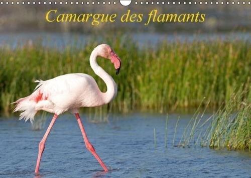 Camargue Des Flamants 2018: La Camargue, Ses Flamants Et Ses Ciels Magnifiques Et Changeants.