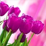 """'180Serviettes, 3plis pliage""""Pink Tulips 1/433cm x 33cm"""