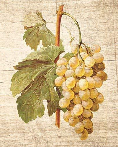Rahmen-Kunst Keilrahmen-Bild - Nobleworks: Grapevine 1 Leinwandbild Wein-Trauben Reben Küche (80x100)