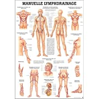 Drainage Lymphatique manuel Mini Poster Anatomie 34x 24cm médicaux pédagogiques