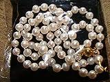 PLAT FIRM Germinación de Las Semillas: Cadena de Perlas (Precio por Solo Dos DãAs) $ 7.00