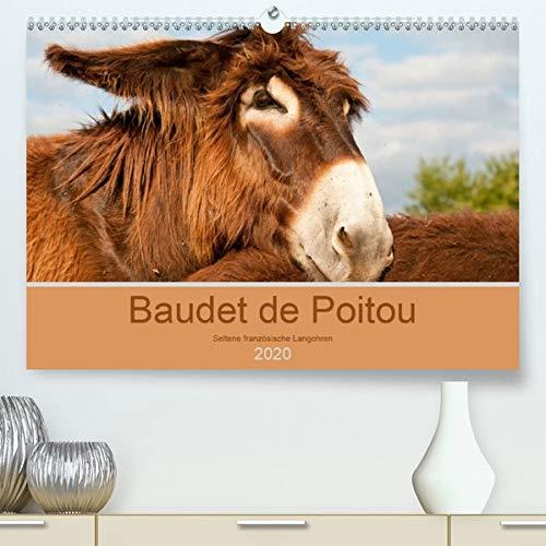 Baudet de Poitou - Seltene französische Langohren(Premium, hochwertiger DIN A2 Wandkalender 2020, Kunstdruck in Hochglanz): Wunderschöne Fotografien ... (Monatskalender, 14 Seiten ) (CALVENDO Tiere) -