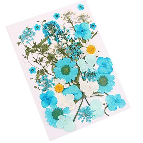 FURU Gemischte Organische Natürliche Gepresste Getrocknete Blumen DIY Kunst Floral Telefon Fall Dekore Sammlung Scrapbooking Handwerk 5 Arten