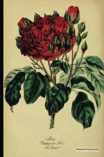 Vintage Moss Rose (Botanical Print Journal: Rose Moss, 6