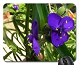 TRADESCANTIA ANDERSONIANA LEONORA Mouse Pad, Mousepad (Forces of Nature Mouse Pad)
