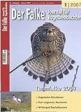 Der Falke  Bild