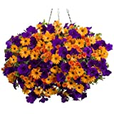 100pcs cuelgan semillas de petunia semillas de flores de melisa originales flores perennes para el jardín de bonsai crisol de establecimiento petunia 1