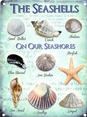 The Seashells on Our Seashores. Sand Dollar, Conch, Abalone, Mussel, Starfish, Snail, Scallop and Limpet. Old Vintage for Kitchen, Bathroom, Home, Restaurant or Pub. Medium Metal/Steel Wall Sign