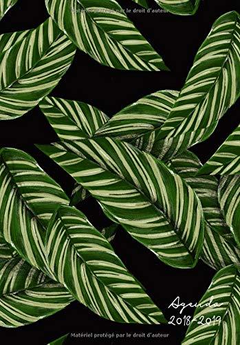 Agenda 2018-2019: Motif palmier floral, Agenda semanier de Juillet 2018 à Août 2019 (moderne et épuré dans l'air du temps) por Papeterie Collectif
