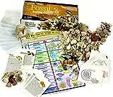 Dancing Bear Sortierung Activity Kit Fossil Sammlung mit über 100 PC -