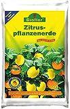 Premium Bioflor Zitronenerde Zitruserde für alle Arten von Zitrusfrüchten geeignet 10Ltr.