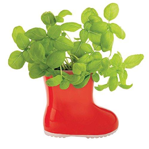 Just Contempo nc-gd-24305Fragola Selvatica in ceramica, colore rosso - Fragola Grow Kit