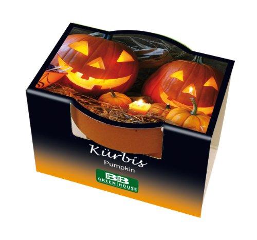 Mini-Pflanzset Kürbis / Halloween