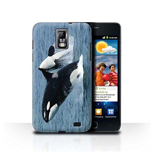 Stuff4 Hülle / Case für Samsung Galaxy S2 Duos/i929 / Schwertwal/Orca Muster / Marine Tierwelt Kollektion (Orca-duo)