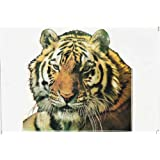 TIGER Racing Tuning Autocollant Dimensions 27 x 18 cm