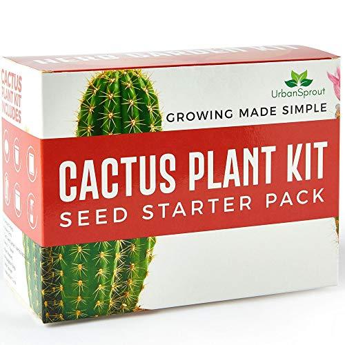 kaktus Samen Set - DIY wachsen Ihre Pflanzen-Kaktus im geschlossen - Ein ungewöhnliches Geschenk für die Gartenarbeit - Körner, Anzuchttöpfe, Erde für das Cactus