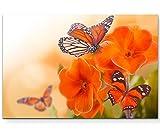 Paul Sinus Art Leinwandbilder | Bilder Leinwand 120x80cm orangene Blumen mit Schmetterlingen