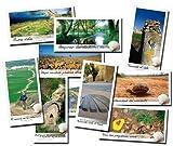 Jakobsweg-Postkarten-Serie