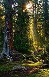 MAIYOUWENG Collection Classici di Legno Puzzle 500 Pezzi- Paesaggio Naturale della Foresta -Gioco Intellettuale per Adulti E Bambini