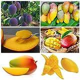 Pinkdose Mango-Pflanze/Tüte für Blumentöpfe, Tropische Bonsai, Bio-Haus, Garten, Obst und Gemüse, Blumentopf, gemischt