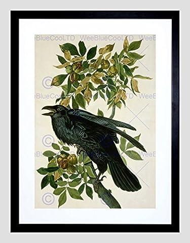 AUDUBON AMERICAN RAVEN BLACK FRAMED ART PRINT PICTURE B12X5253