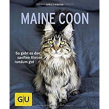 Maine Coon: So geht es den sanften Riesen rundum gut