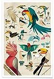 """JUNIQE® Poster 20x30cm Vögel Kinderzimmer & Kunst für Kinder - Design """"Birds"""" (Format: Hoch) - Bilder, Kunstdrucke & Prints von unabhängigen Künstlern - Kunst & Bilder von Vögeln - entworfen von Dieter Braun"""