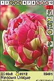 Rarität: Tulipa - Gefüllte Tulpe