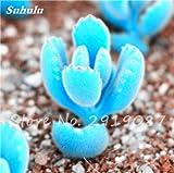 Schlussverkauf! 200 Stück Seltene Mini Blau Lithops Samen Kaktus Sukkulenten Samen Ass Blumen Stein Bonsai Balkonpflanze für DIY Hausgarten