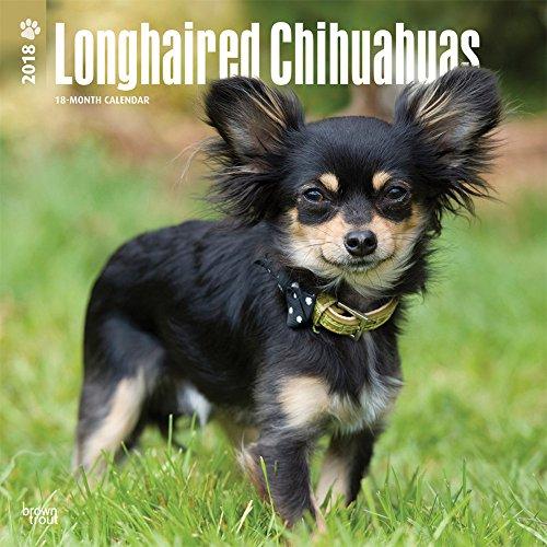 Longhaired Chihuahuas - Langhaar-Chihuahuas 2018 - 18-Monatskalender mit freier DogDays-App: Original BrownTrout-Kalender [Mehrsprachig] [Kalender] (Wall-Kalender)