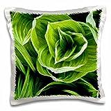 Danita Delimont - Flora - False Hellebore flora, Ashuelot River, NH - US30 JMO1300 - Jerry and Marcy Monkman - 16x16 inch Pillow Case (pc_92392_1)