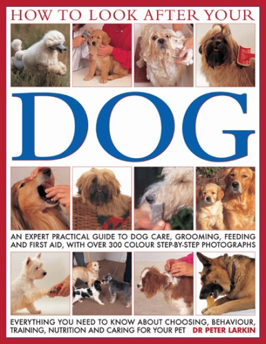 how-to-look-after-your-dog-an-expert-practical-guide-to-dog-care-grooming-feeding-and-first-aid