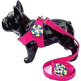 Lushpetz Blumenhundegeschirr mit Passendem Bleisatz in Pink, Schwarz, Blau oder Lila für Kleine Hunderassen von XSmall (3 Passt auf die Brust 49cm / 19