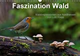 Faszination Wald. Waldimpressionen aus Nordhessen von Lutz Klapp (Wandkalender 2019 DIN A3 quer): Waldimpessionen aus Nordhessen. (Monatskalender, 14 Seiten ) (CALVENDO Natur)