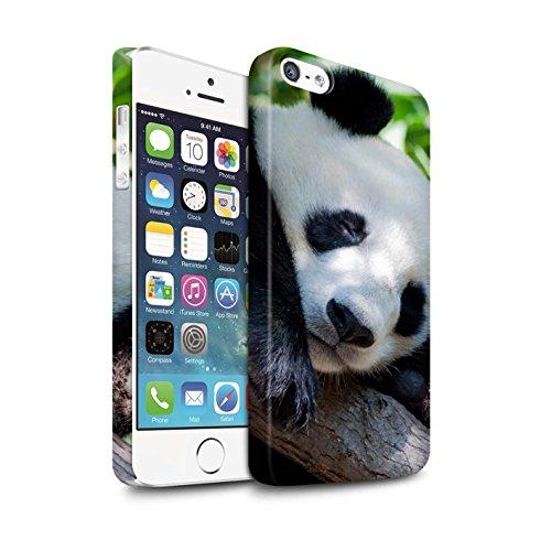 STUFF4 Matte Snap-On Hülle / Case für Apple iPhone 7 / Pfau Muster / Wilde Tiere Kollektion Bär