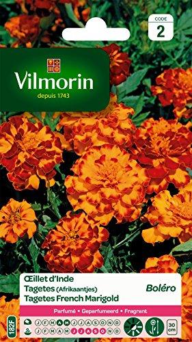 Vilmorin 5441342 Œillet, Jaune, 90 x 2 x 160 cm