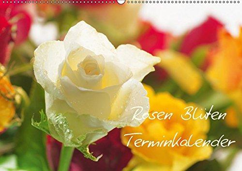 Rosen Blüten Terminkalender (Wandkalender 2019 DIN A2 quer): Ein Terminkalender in dem die Schönheit und die Vielfältigkeit der Rosen zu sehen ist (Geburtstagskalender, 14 Seiten ) (CALVENDO Natur)