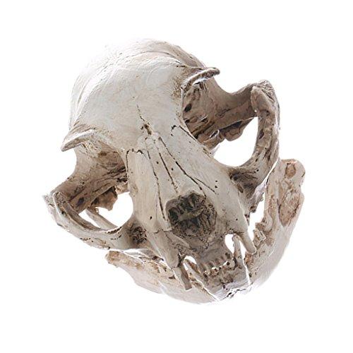 e Harz Katze Schädel Figur Replik Medizinischen Unterricht Skelett Modell Halloween Party Dekor (Halloween Skelett Party)