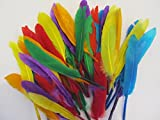 Quill Feathers approx 14cm