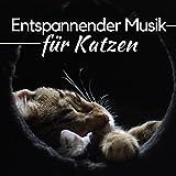 Entspannender Musik für Katzen