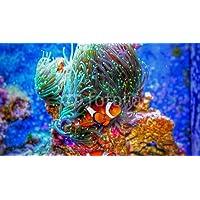 Impresión de DRUCK-SHOP24 Deseos Diseño: Clown Fish in Marino Acuario # 96369041 –