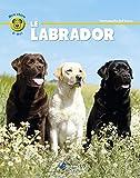 Lire le livre labrador gratuit