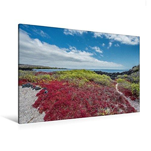 Calvendo Premium Textil-Leinwand 120 cm x 80 cm Quer, Isla Floreana | Wandbild, Bild auf Keilrahmen, Fertigbild auf Echter Leinwand, Leinwanddruck Orte Orte